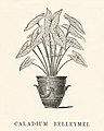 Vintage illustrations by Benjamin Fawcett for Shirley Hibberd digitally enhanced by rawpixel 15.jpg