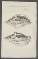 Voluta musicalis - - Print - Iconographia Zoologica - Special Collections University of Amsterdam - UBAINV0274 087 04 0040.tif