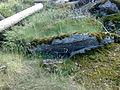 Vylet na Ostry, Sumava - 9 cervenec 2011 201.jpg