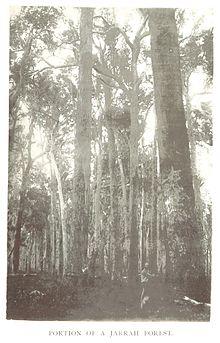 Jarrah Forest Wikipedia