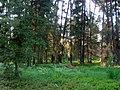 WILCZE ŁUGI lato 52 - panoramio.jpg