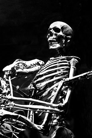Grover Krantz - Skeletons of Grover Krantz and his dog, Clyde, at the Smithsonian Museum.