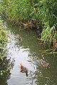 Watery Habitat - geograph.org.uk - 504085.jpg