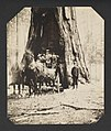Wawona Tunnel Tree (16826572279).jpg