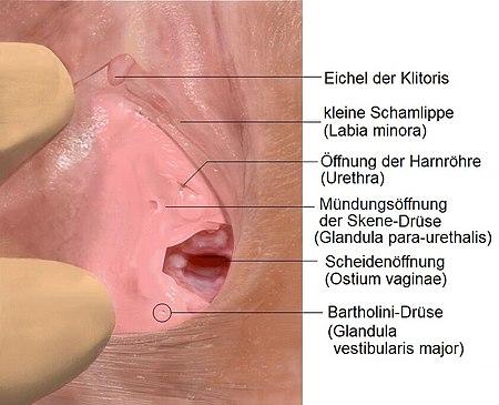 Klitoris Nach Geburt Kleiner