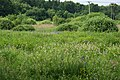 Wet meadow with Siberian Iris (Iris sibirica), Winnicka street, Kostrze, Krakow, Poland.jpg