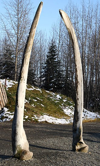 Alaska Native Heritage Center - Whale bones at the Alaska Native Heritage Center.