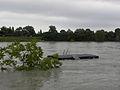 Wien - Hochwasser Juni 2013 - Badeplatz an der Neuen Donau.jpg