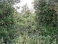 Wild garden - geograph.org.uk - 1447694.jpg