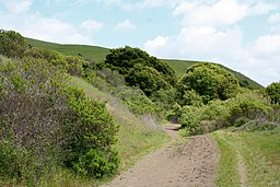 Wildcat Canyon Richmond California.JPG