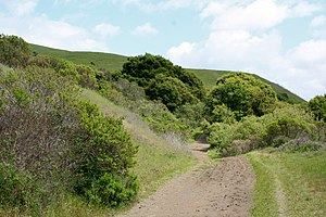 Wildcat Canyon Regional Park - Image: Wildcat Canyon Richmond California