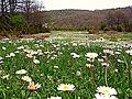 Wildflowers in the High Meadow (3548643916).jpg