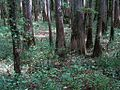 William B Clark Conservation Area Rossville TN 010.jpg