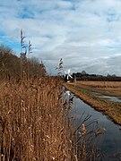 Wind pump at Wicken Fen - geograph.org.uk - 1709400.jpg