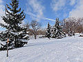 Withrow Park, winter 3.jpg