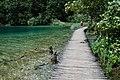 Wooden path along the lake Galovac.jpg