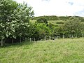 Woodland margin - geograph.org.uk - 865692.jpg
