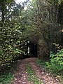 Woodland ride near Kilgrammie - geograph.org.uk - 334252.jpg