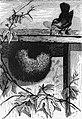 Wren's Nest.jpg