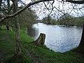 Wye valley walk in early spring - geograph.org.uk - 321424.jpg