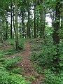 Yding skovhøj burial mound.JPG