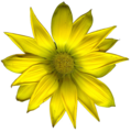 Yellow Flower Edited.png