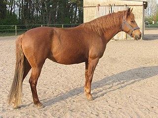 Amor por los caballos. 320px-Zafira_Al_Saida_0001