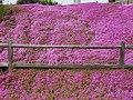 Zapallar -20171107 fRF05 Beranda flores.jpg