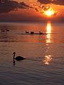 Zatoka Pucka. Łabędzie i wschód Słońca.jpg