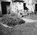 """""""Fežu"""" in """"leščine"""" od fižola sušijo, Manče 1958.jpg"""