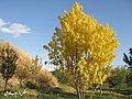 (((پاییز در روستای مردق مراغه))) - panoramio.jpg