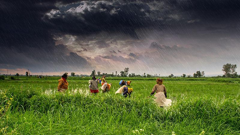 Farmaření v Indii