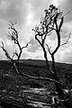Árvore no Parque Estadual do Ibitipoca.jpg