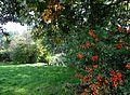 Łódź, park im. Reymonta, poł. XIX -5.JPG