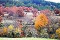 Φθινοπωρινά χρώματα κάτω από το χωριό Ανταρτικό.jpg
