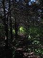 Дендрологічний парк, Довгинцівський район 17.JPG