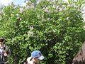 Дендрологічний парк 111.jpg