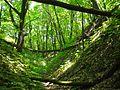 Дубовый лес.jpg