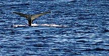 Rottnest Island-Other animals-Западно от Фриментъл, Австралия - panoramio