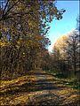 Измайловский парк - panoramio (2).jpg