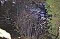 Кам'янець-Подільський ботанічний сад. Фото 3.jpg