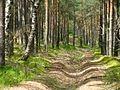 Лесные тени - panoramio (1).jpg