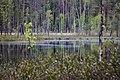 Озеро (2015.05) - panoramio.jpg
