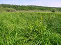 Осоковое болото - panoramio.jpg