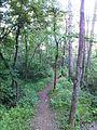 """Парк шума """"Гази Баба"""" 61.jpg"""