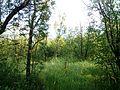 """Парк шума """"Гази Баба"""" 73.jpg"""