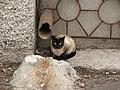 Россия, Нижегородская область, Балахна, кошка, 12-10 09.05.2006 - panoramio.jpg