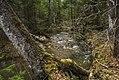 Р.Шумиха - panoramio (3).jpg