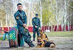 Собаки НГУ 3988 (19354769765).jpg