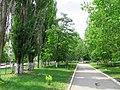 Солнечный. 4 июня 2013г. - panoramio (46).jpg